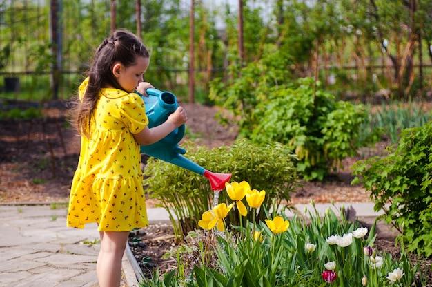 Uma linda garota em um vestido amarelo rega tulipas amarelas de um regador azul no jardim do quintal.