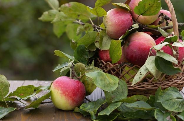 Uma linda maçã vermelha em uma mesa de madeira com uma cesta de maçãs e galhos