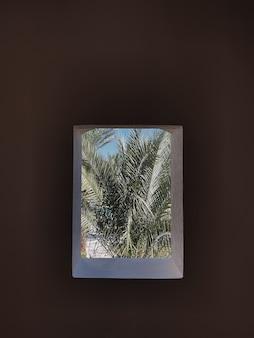 Uma linda palmeira tropical sai em uma janela bege com sombras de luz solar