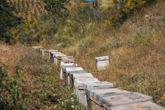 Uma linha de colmeias de abelhas em um campo de flores na montanha