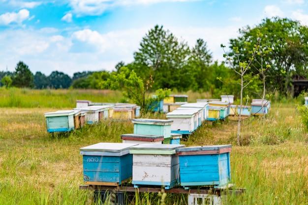 Uma linha de colmeias de abelhas em um campo