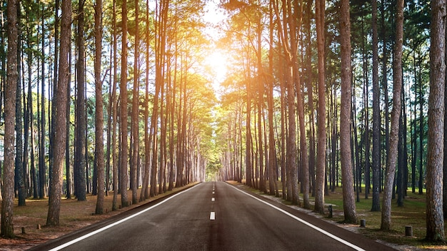 Uma longa estrada reta na floresta.