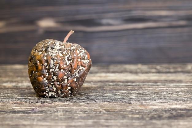 Uma maçã podre coberta de mofo e bolor, comida estragada, fungo e mofo destruiu uma maçã madura durante uma violação de armazenamento, closeup