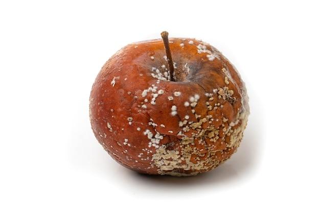 Uma maçã podre com mofo em um fundo branco.
