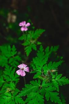 Uma macro de uma flor roxa no meio da floresta