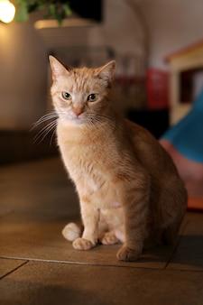 Uma mãe de gato marrom na varanda da frente