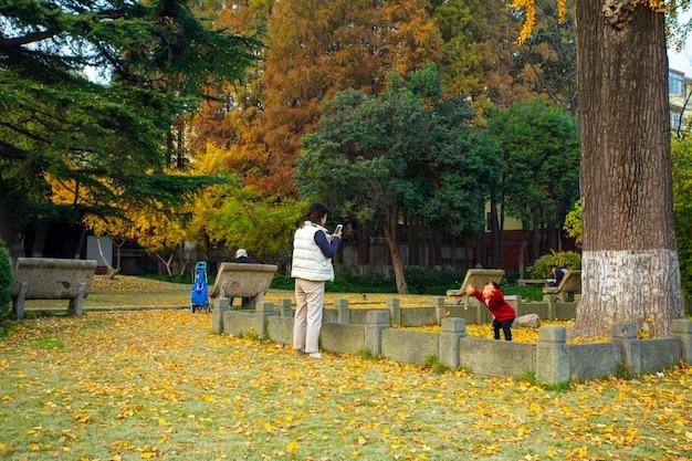 Uma mãe e um filho tiram fotos sob a árvore ginkgo