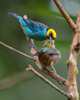 Uma mãe pássaro alimentando seu bebê