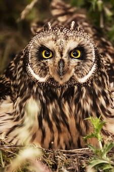 Uma magnífica coruja com belos olhos amarelos entre as árvores