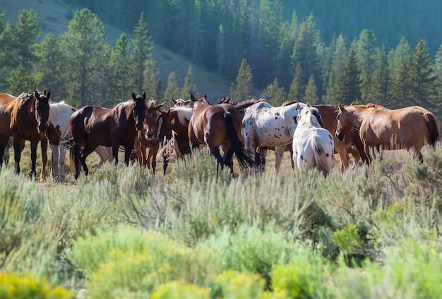 Uma manada de cavalos em um prado de outono