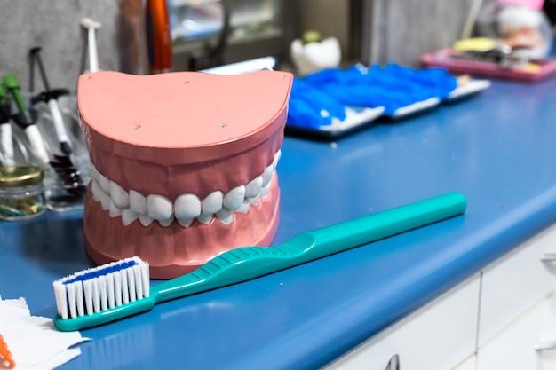 Uma mandíbula artificial e uma escova. prótese dentária dente de plástico