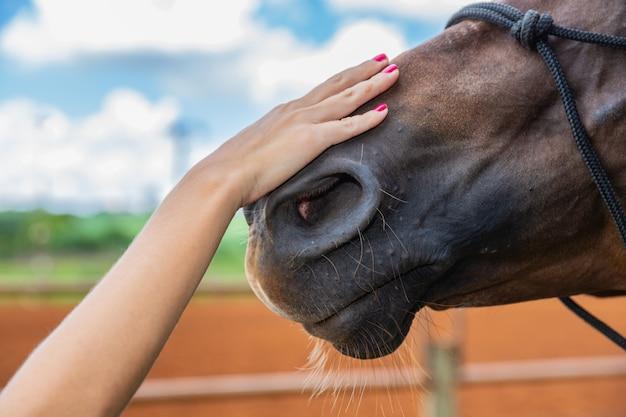 Uma mão estendida faz um gesto amigável para um cavalo, atiçando a cabeça