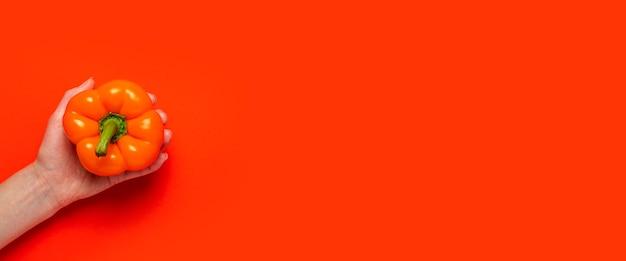 Uma mão feminina na palma da mão segura uma pimenta laranja em um fundo vermelho. vista superior, configuração plana. bandeira.