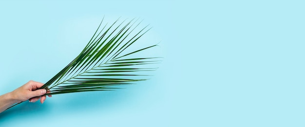 Uma mão feminina segura uma folha verde de uma palmeira sobre uma superfície azul. vista superior, configuração plana. bandeira. Foto Premium