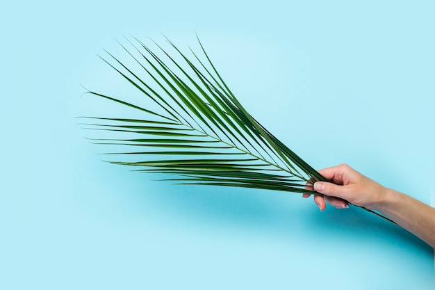 Uma mão feminina segura uma folha verde de uma palmeira sobre uma superfície azul. vista superior, configuração plana.