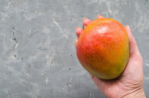 Uma mão segura fruta suculenta madura da manga brasileira