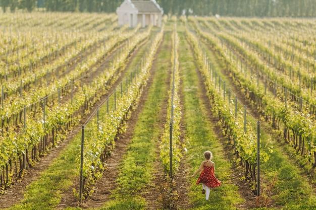 Uma menina corre entre linhas de uvas