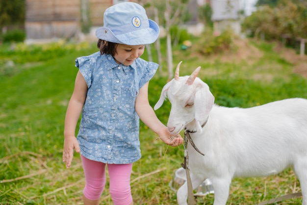 Uma menina está alimentando uma cabra no gramado, um verão ensolarado