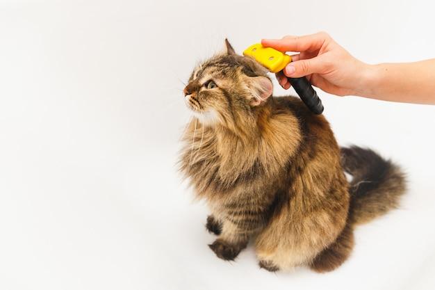 Uma menina está coçando um gato com um furminador. casa de banho branca como pano de fundo