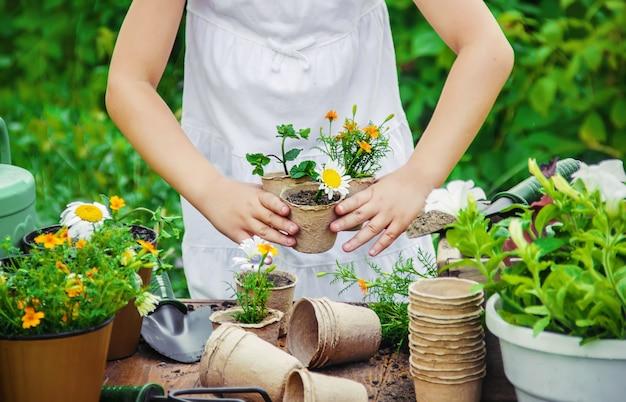 Uma menina está plantando flores. o jovem jardineiro. foco seletivo.