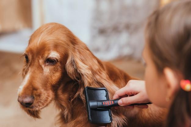 Uma menina para cuidar do cachorro e pentear o cabelo