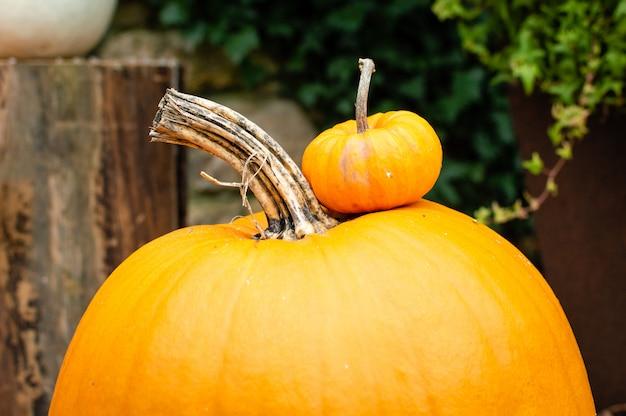 Uma mini abóbora alaranjada em uma maior no outono no mercado dos fazendeiros ao ar livre.