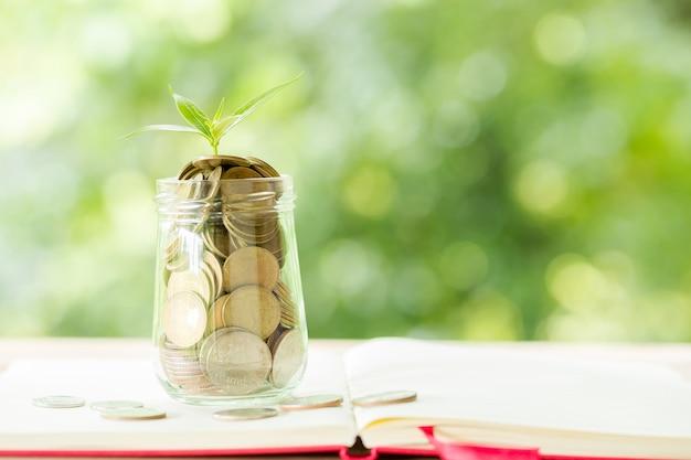 Uma moeda em uma garrafa de vidro com uma pequena árvore
