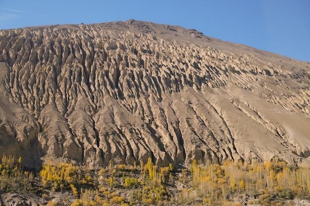 Uma montanha corroída com amarelo deixa poplar árvores no outono. gilgit baltistan, paquistão.