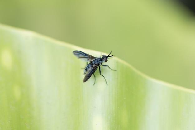 Uma mosca em uma folha verde