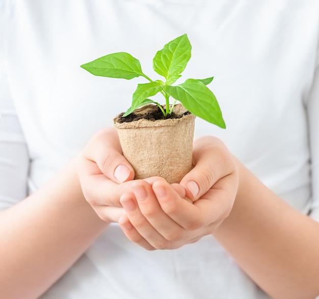 Uma muda em um vaso verde em mãos humanas