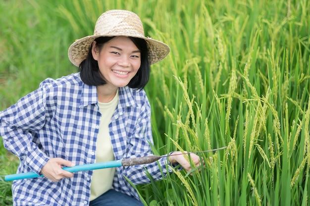 Uma mulher agricultora asiática com uma camisa listrada está sentada segurando uma foice e uma cabeça de arroz com um rosto sorridente em um campo.