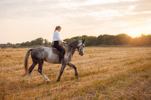 Uma mulher cavalga um campo a cavalo ao pôr do sol. treino desportivo, hipismo, caminhada, aluguer e venda de cavalos, rancho, munições. fundo bonito. amor e amizade ao animal, cuidado.