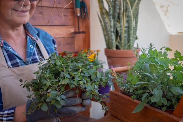 Uma mulher idosa em seu jardim cuida das novas plantas aromáticas. ela segura um vaso de hortelã fresca. fundo e mesa rústicos de madeira