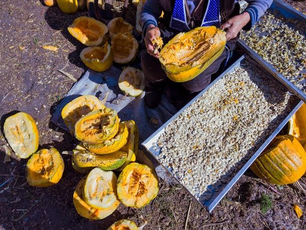 Uma mulher idosa separa as sementes das metades cortadas das abóboras