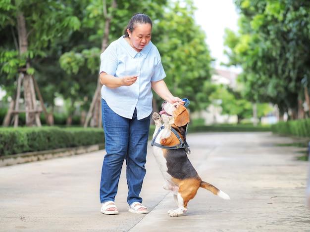 Uma mulher idosa tenta treinar o beagle para ficar sobre duas pernas, recompensando com comida, conceito de animal de estimação