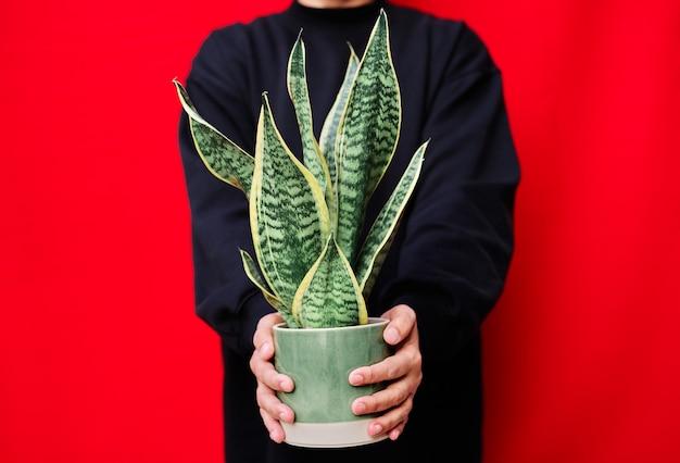 Uma mulher vestida de preto segurando um vaso com plantas cobras na parede vermelha