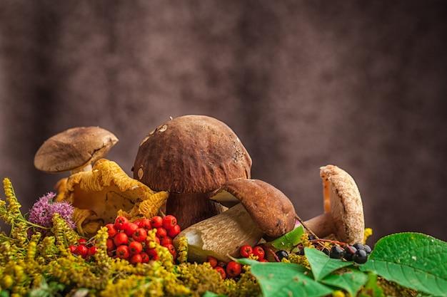 Uma natureza-morta bonita de grandes cogumelos brancos naturais, folhas alaranjadas de cinza de montanha