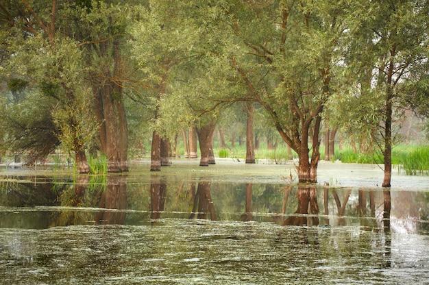 Uma paisagem de floresta inundada