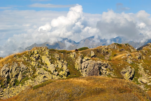 Uma paisagem de montanha rochosa com um prado alpino e um cavalo solitário pastando entre as pedras