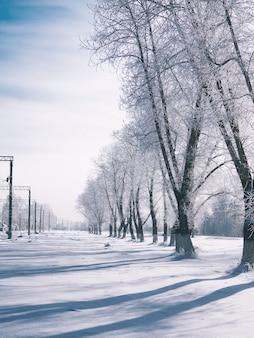 Uma paisagem desolada de inverno. manhãs de inverno e as longas sombras das árvores na neve
