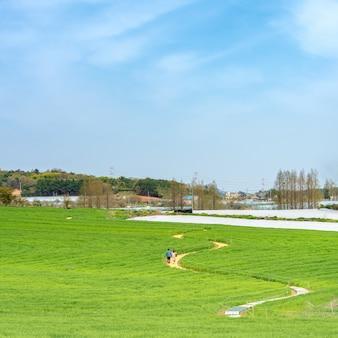 Uma paisagem rural cheia de céu azul e cevada verde fresca