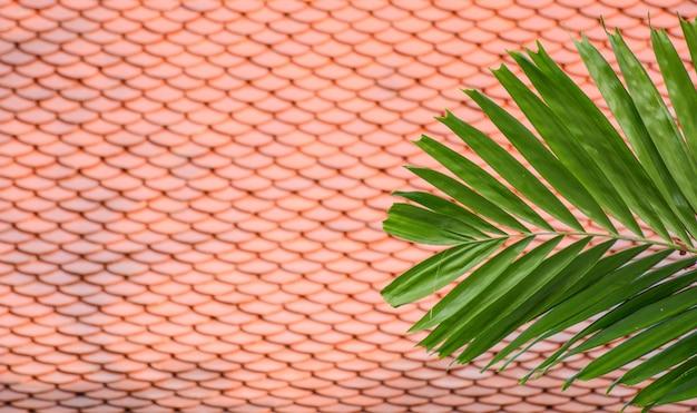 Uma palma deixa a frente de um telhado laranja
