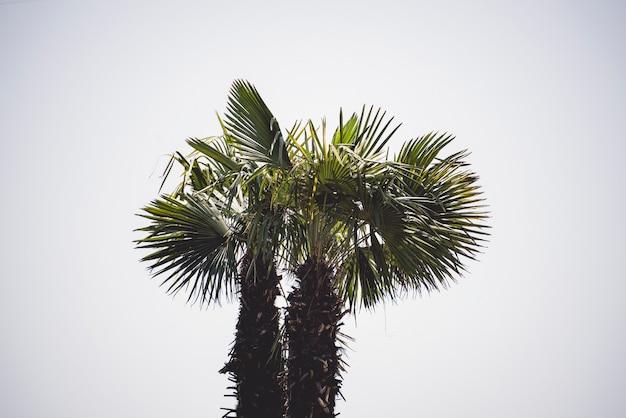 Uma palmeira contra o céu, símbolo das férias de verão nos trópicos