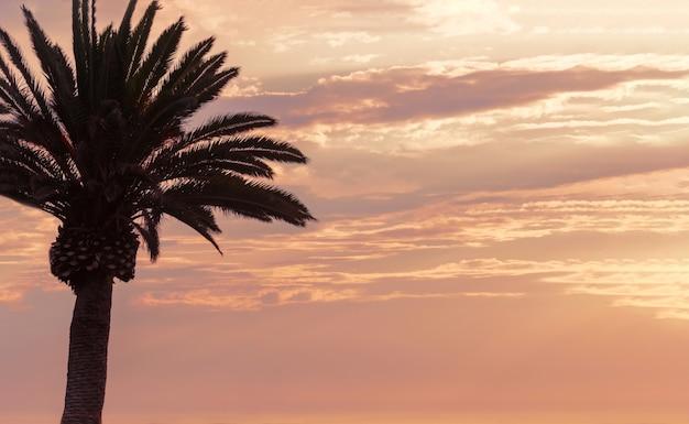 Uma palmeira e lindo céu com nuvens dramáticas