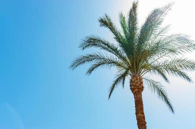 Uma palmeira no fundo do céu azul no dia ensolarado sem nuvens