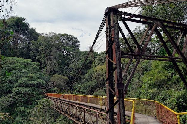 Uma passarela de madeira conectada a dois lados da floresta