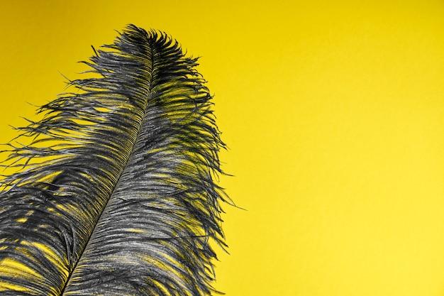 Uma pena de pavão cinza sobre um fundo amarelo.