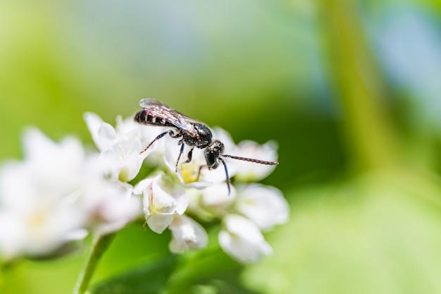 Uma pequena abelha em uma flor