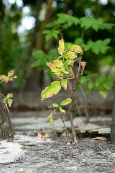 Uma pequena árvore cresce do solo em uma grande floresta