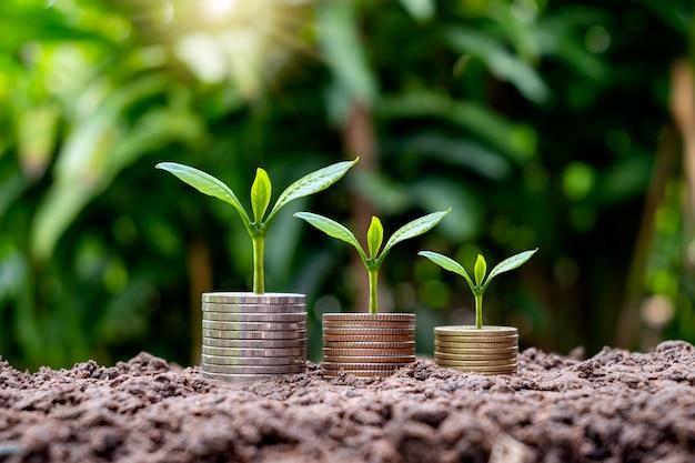 Uma pequena árvore cresce em moedas e árvores em dinheiro cresce em ideias de solo, investimento e finanças.